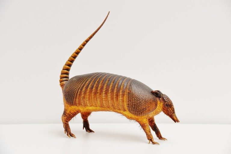 Armadillo taxidermy decorative animal 1970